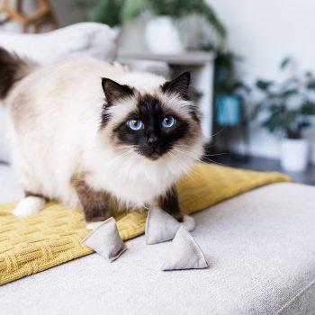 zero waste cat