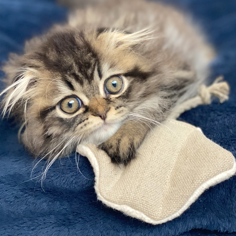 bobaandvespa-stingray-cat-toy-lifestyle